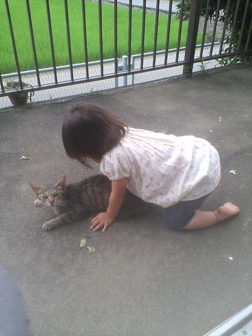 猫ちゃんと