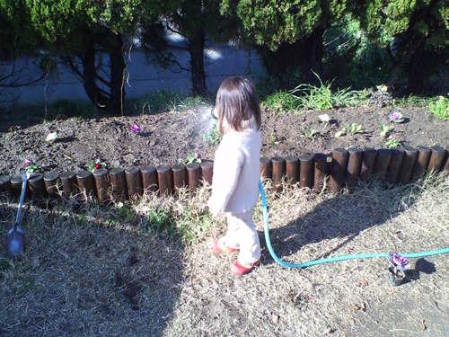 花植え&水撒き