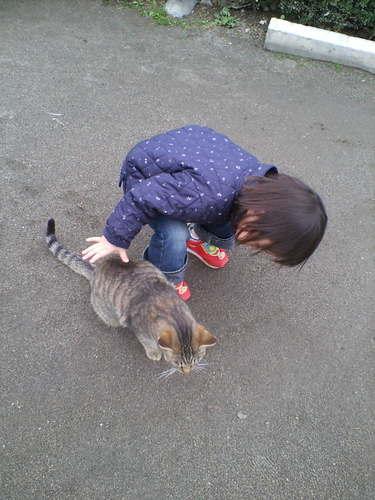 ネコちゃんと