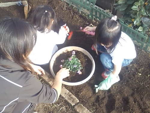 花壇にお花を植えましょう!