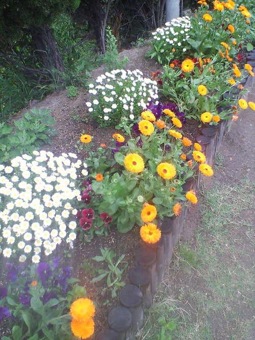 コート脇の花壇