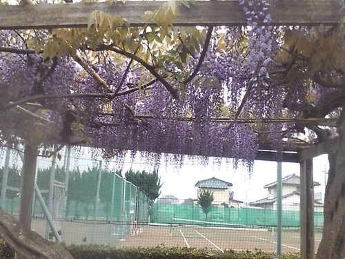 2009/4/21 藤棚