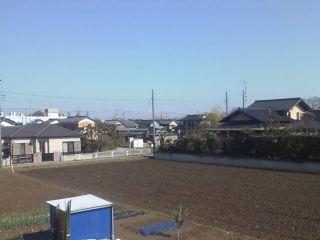 クラブハウスから権現堂の桜が!
