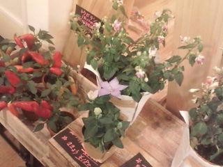 今週の「小さなお花屋さん」